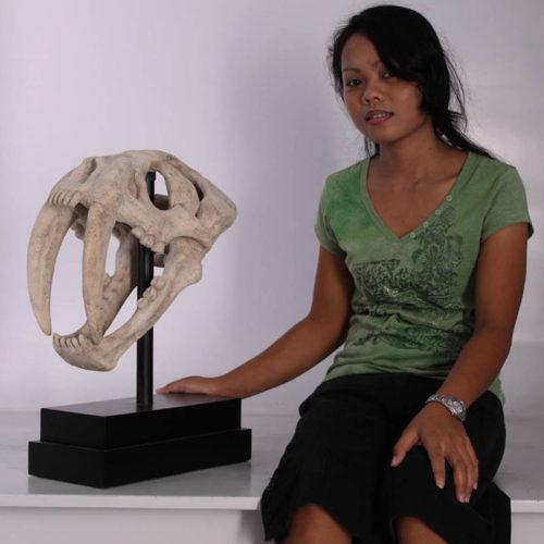 Crâne Lion des cavernes sur socle NLC DECO