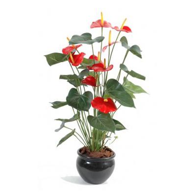 Anthurium fleurs rouges