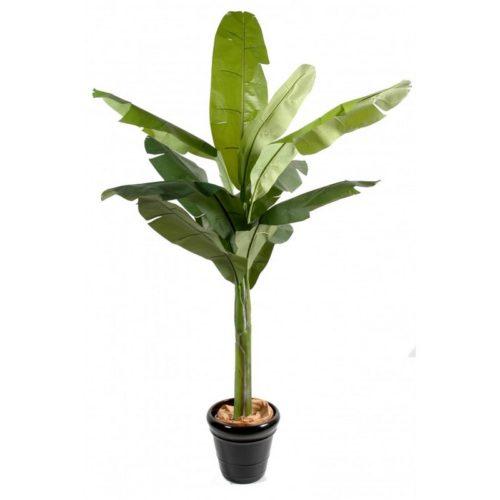 Bananier en pot nlcdeco