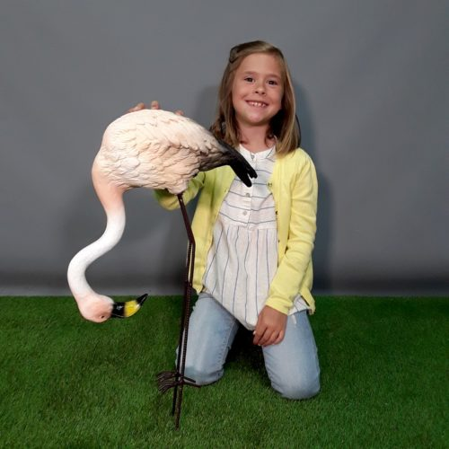 Flamant rose parcs animaliers nlcdeco