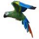 Perroquet-vert-nlcdeco.jpg