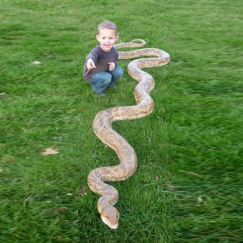 Python ! NLC DECO