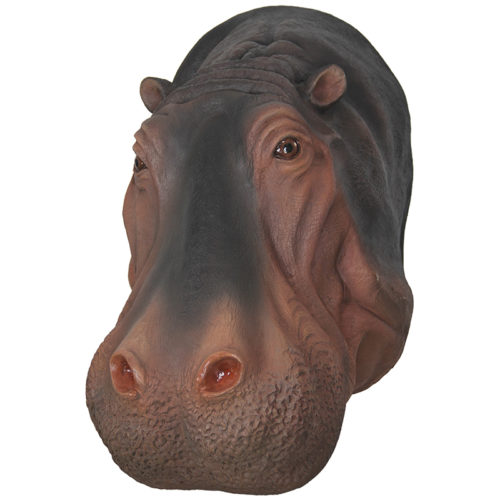 Trophée Hippopotame