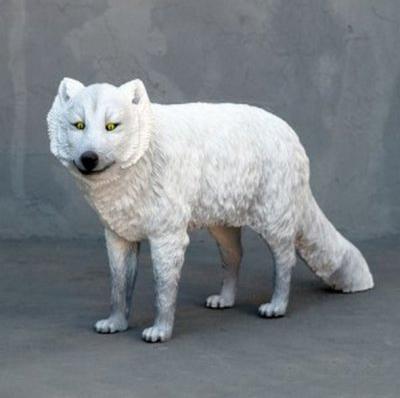 Renard polaire