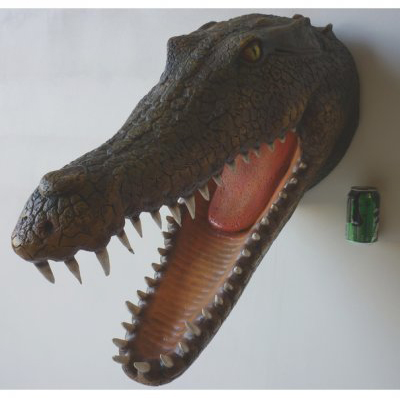Trophée Crocodile