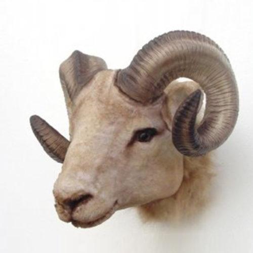 Trophée-Mouflon nlcdéco NLC DECO