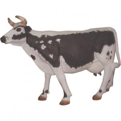 Vache race Vosgienne