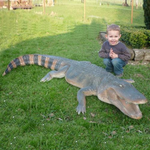 alligator en resine grandeur nature