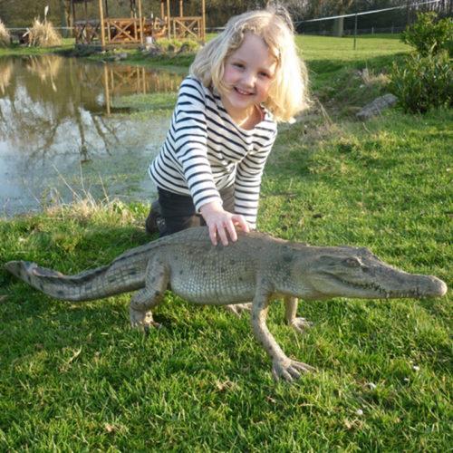animaux résine cocodile Crocodile qui marche ! NLC DECO