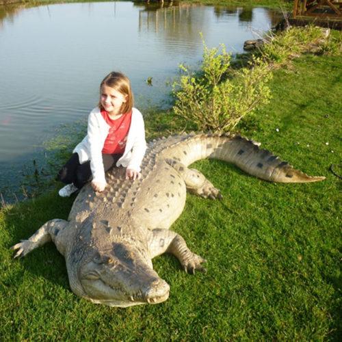 Crocodile NLC DECO