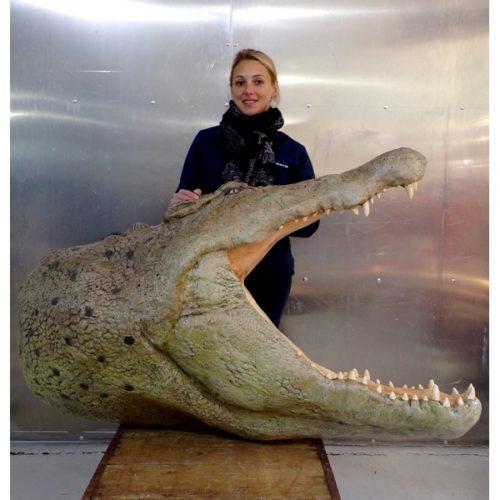 décor mural crocodile géant