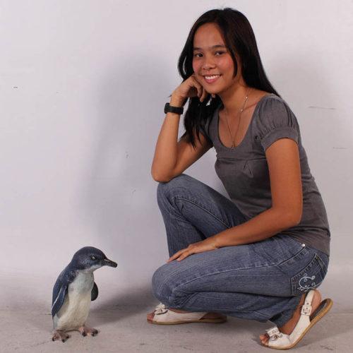 pingouin nlc deco