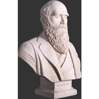 Buste Darwin finition pierre
