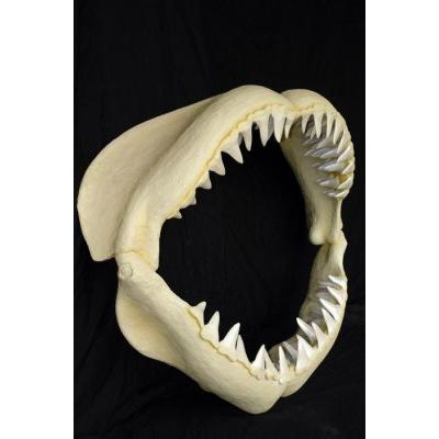 Mâchoire de requin GM