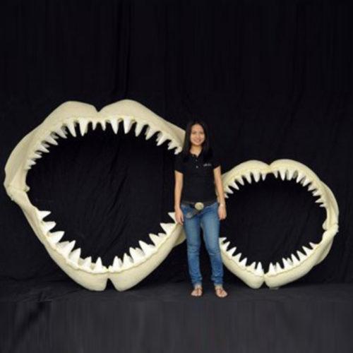 Mâchoire-de-requin-M