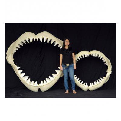 Mâchoire de requin M
