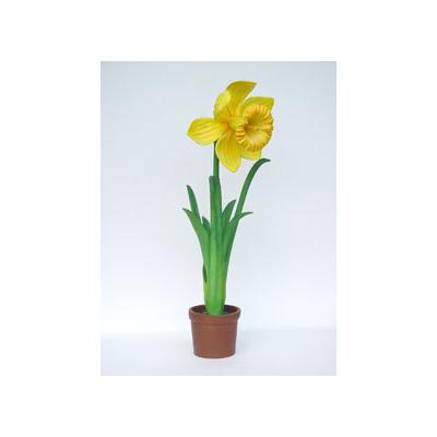 Narcisse géante