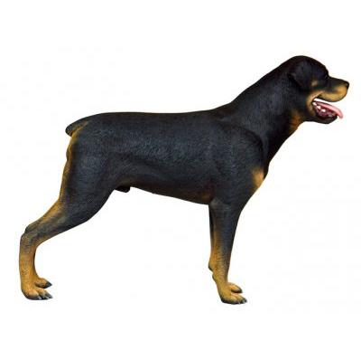 Rottweiler debout noir