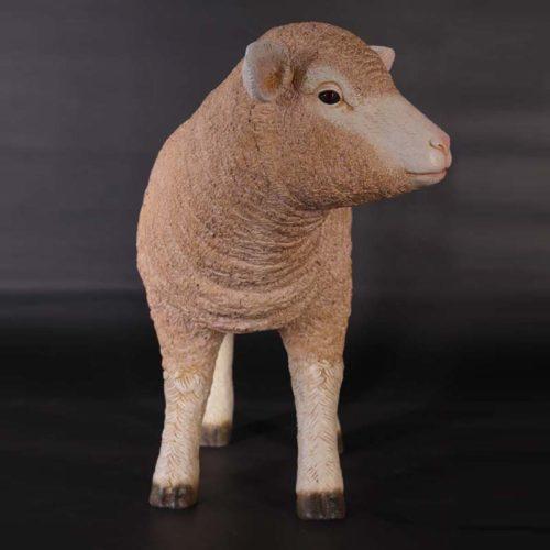 agneau NLC DECO