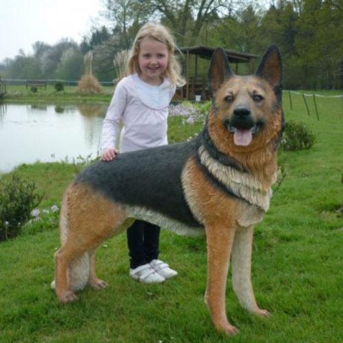 chien berger allemand 110104 nlcdeco
