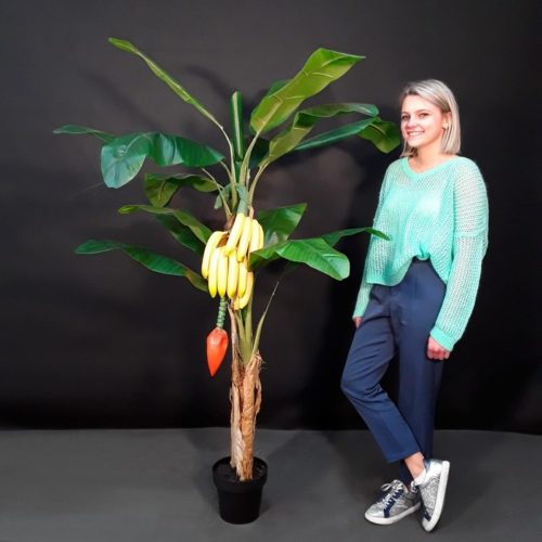 Bananier et ses bananes nlcdeco