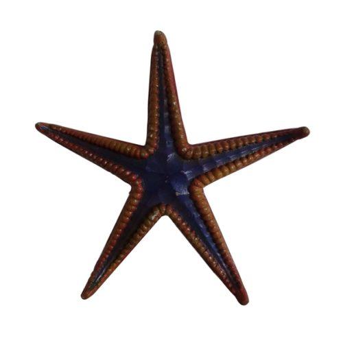 étoile de mer fausse 1