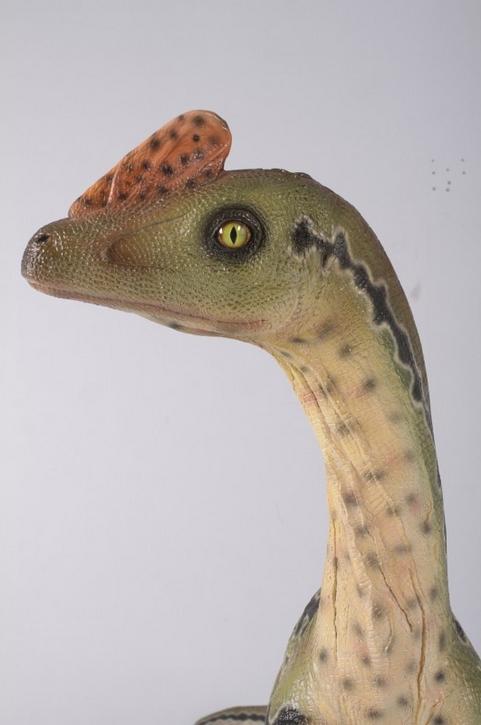 dinosaures NLC DECO
