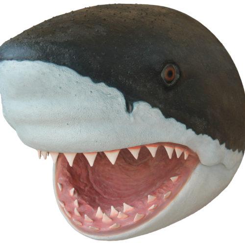 Trophée Requin nlc Déco