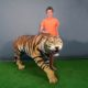 reproduction d'un Tigre nlcdeco