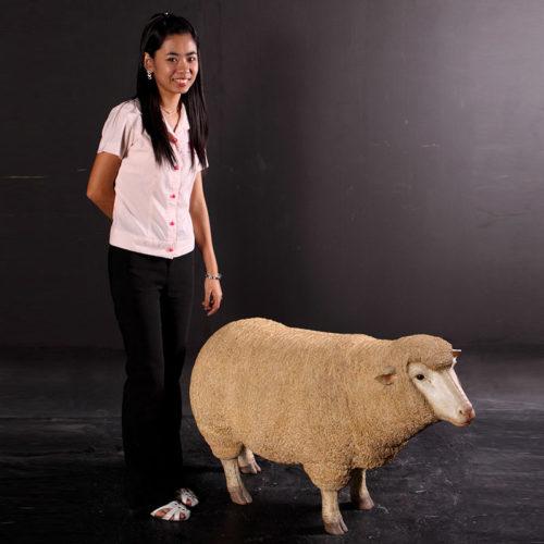 Mouton Mérinos tête haute NLC DECO