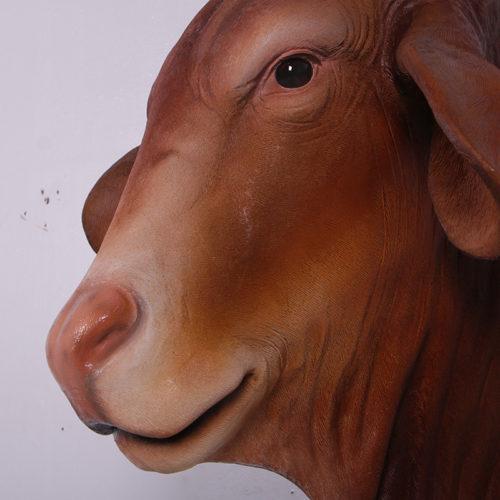 Trophée vache Droughtmaster 150384 nlcdeco nlc deco