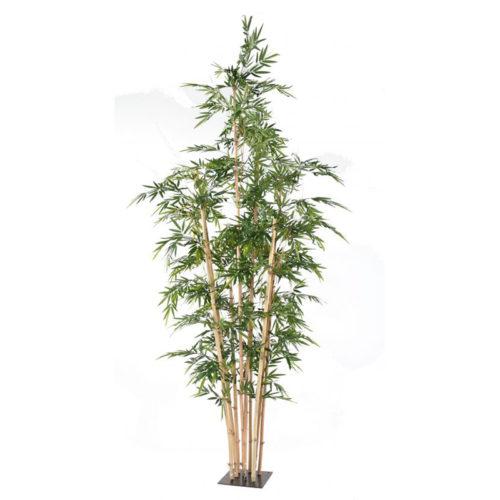 bambou-geant-380 NLC DECO nlc déco