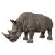 rhinoceros animaux en résine nlcdeco decor safari brousse savane