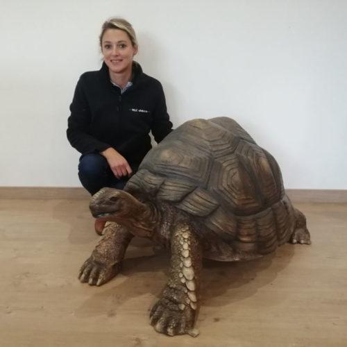tortue animaux en résine nlcdeco.fr galapagos (1)