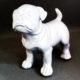 Petit-chien-blanc nlcdeco.fr