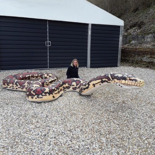 faux Anaconda nlcdeco