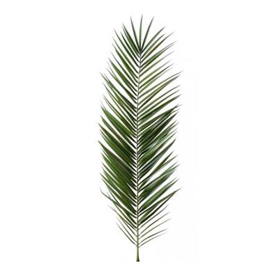 Palme Phoenix Canariensis Plante artificielle