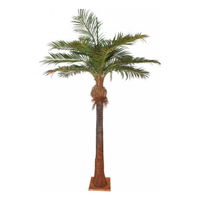 Palmier coco