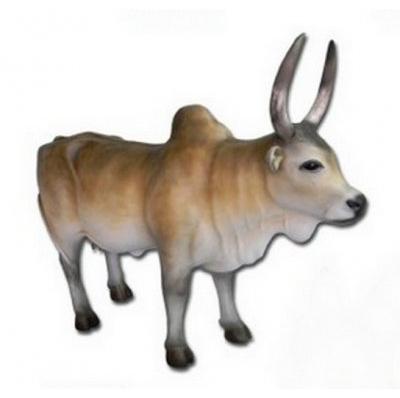 Vache sacrée zébu