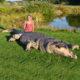 crocodile geant en resine nlcdeco animaux en résine