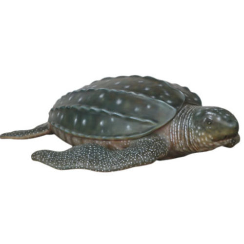 3132 Tortue Luth nlcdeco