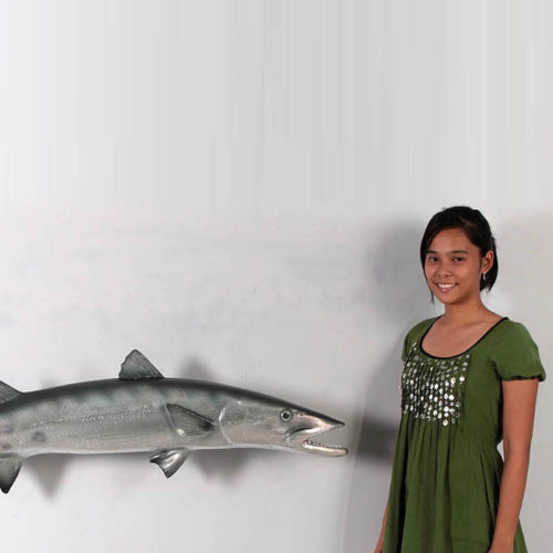 Barracuda nlc deco