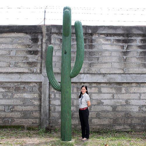 Cactus géant NLC DEC