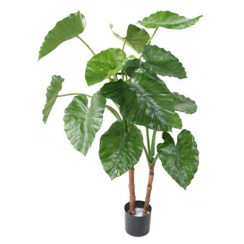 Alocasia Calidora 130 cm