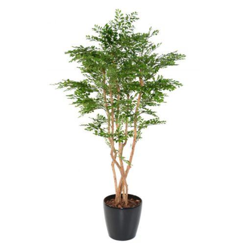 acacia nlcdeco