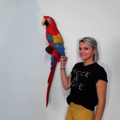 perroquet exotique nlcdeco