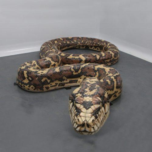 Grand Anaconda nlcdeco