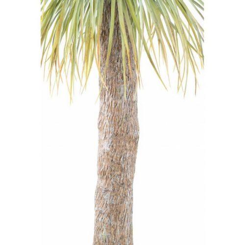 Tronc de l'agave géant artificiel nlcdeco